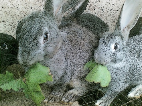 According to the Chinese Zodiac, the Year of 2011 is the Year of the Rabbit, which begins on February 3, 2011 and ends on January 22, 2012.