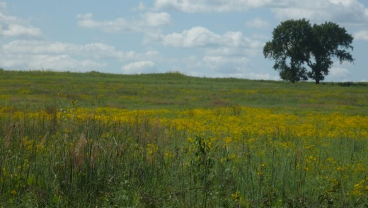 A view of the prairie from the trail.