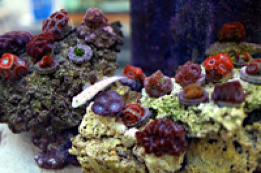 coral photo from Tidal Gardens