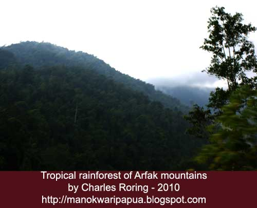 tropical rainforest of Arfak mountains in West Papua province of the Republic of Indonesia