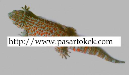 Potential buyers, visit www.pasartokek.com