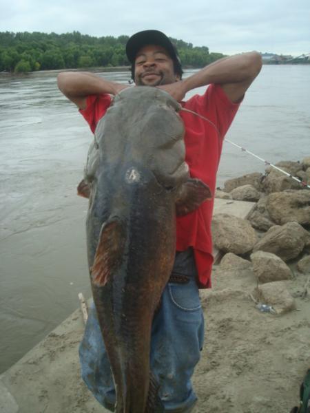 66 pound flathead
