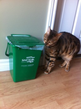 This is the little green bin I put out at the curb each week.