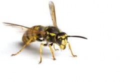 What purpose do wasps and hornets serve?