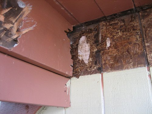 Dry rot spreading to other wood