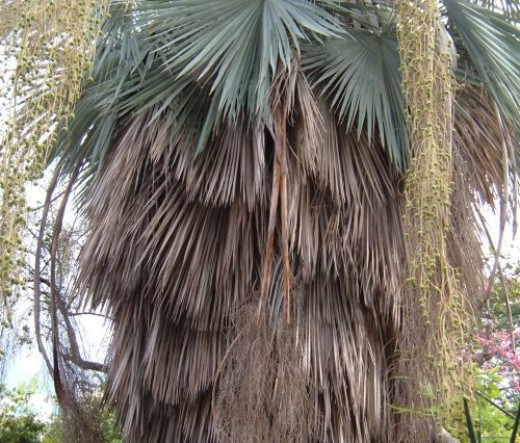Palm tree. Photo by Steve Andrews