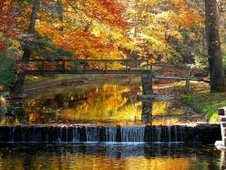 The Splendor of Fall