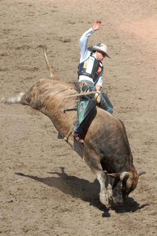 Bull-riding, North America