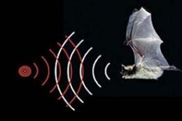 Bat's ultrasonic waves