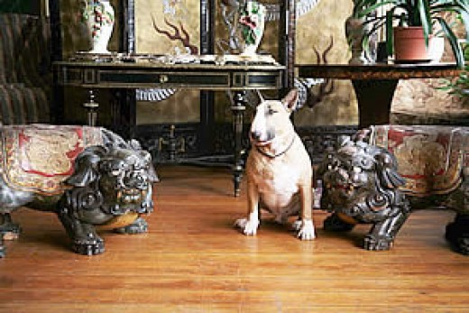Rufus and Foo Dogs