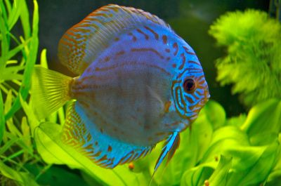Tropical Fish Diseases