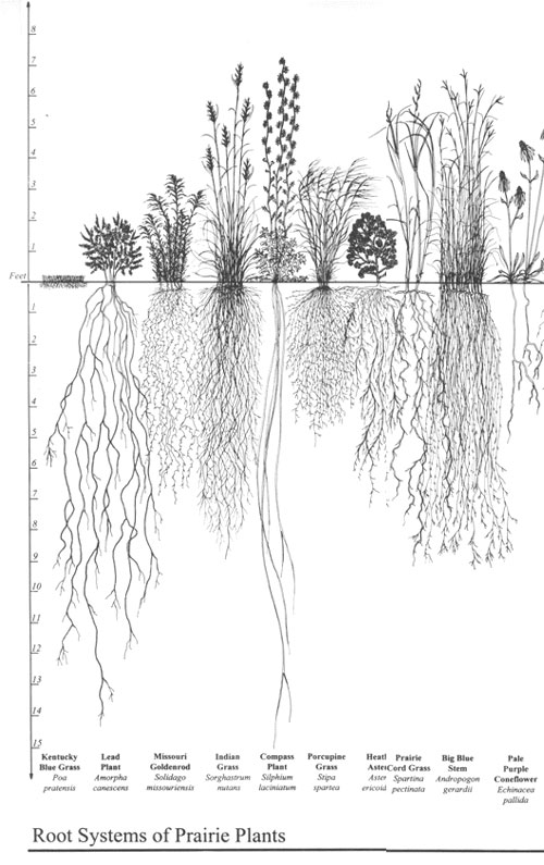 root systems