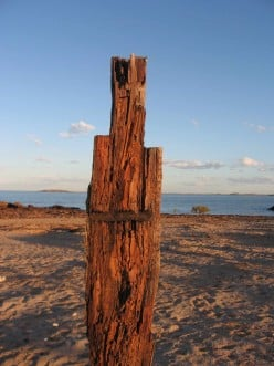 Driftwood upended into art