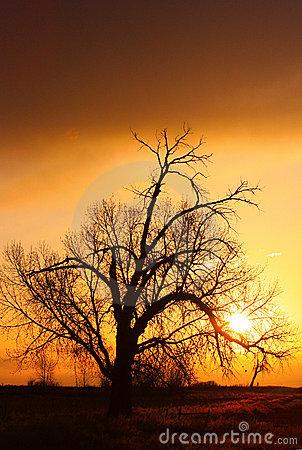 A shimmering sunrise