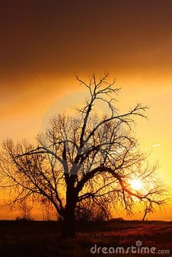 Shimmering Dawn -  a poem