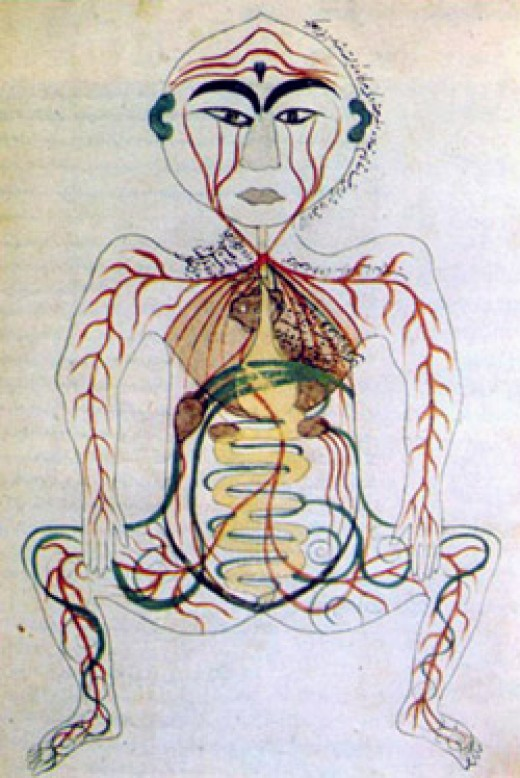 Medieval Islamic study of digestive system