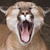 Rabid Puma profile image
