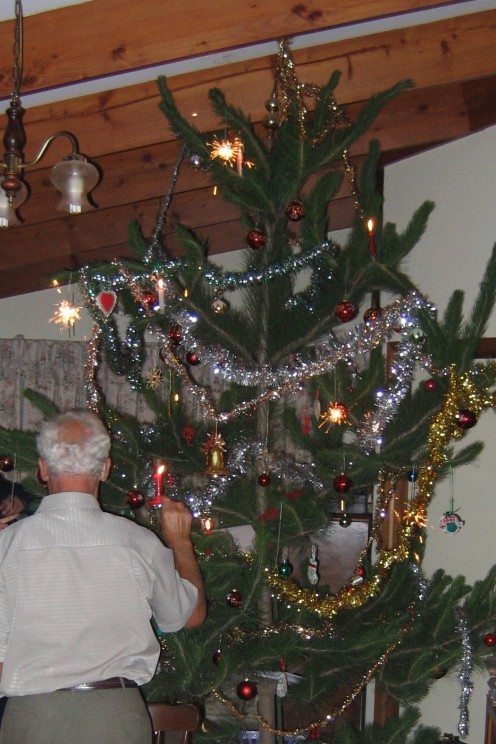 The fresh pine tree reaches the ceiling