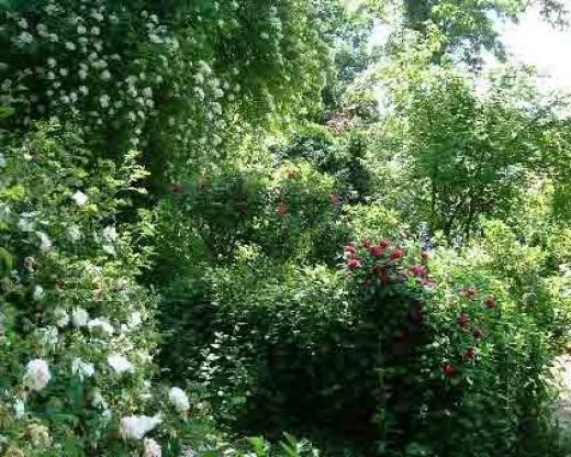 A wild part in the garden!