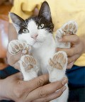 Cat Claw Removal - Should You Have Your Cat Declawed?