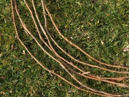 BEGIN WITH SIX TRIMMED STEMS OF SIMILAR LENGTH AND THICKNESS