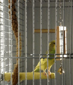 A Budgies  best friend is his mirror.