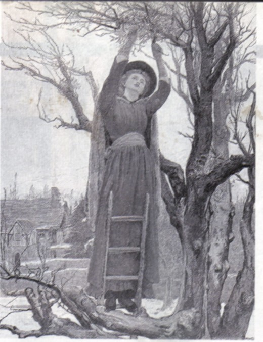 A young lady gathering mistletoe for Christmas.