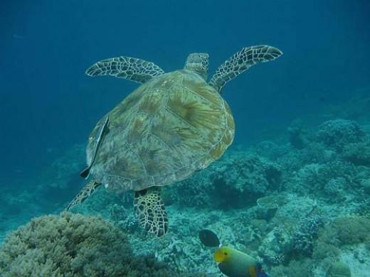Sarawak Diving