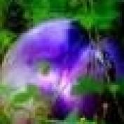 splork profile image