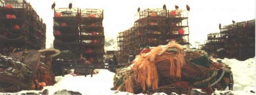 Crab pots and hungry eagles