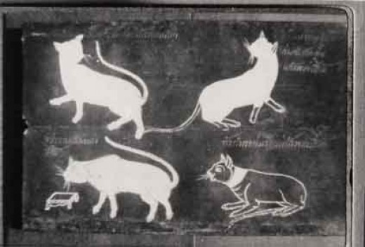 History of Siamese Cats