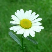 daisy0590 profile image