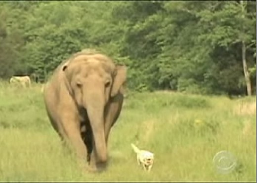 When Dogs and Elephants Can Get Along Like Good Friends...Shouldn't We Be Ashamed When We Can't Get Along With Each Other?