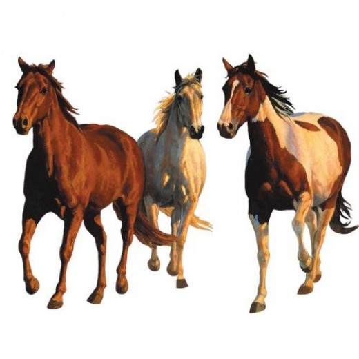 Gorgeous horse wall murals huge equestrian wall stickers for Equestrian wall mural