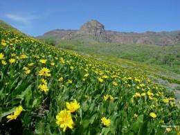 Spring flowers in the Nevada desert