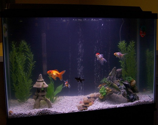 Choosing a substrate for your aquarium sand or gravel for Sand for fish tank