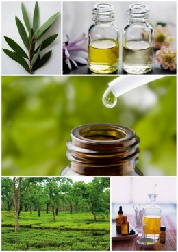 Mixed with witch hazel, tea tree oil is a lotion that can be used after a shower.