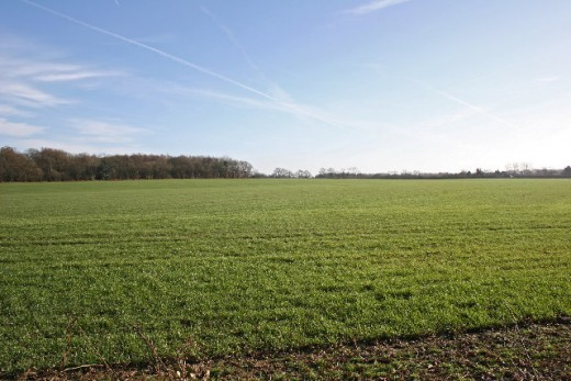 This stretch of ideal farmland will rent for a good price and also will be easily salable in the future.