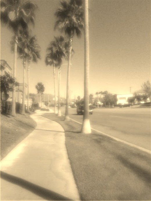Here is a sepia colored photograph of a palm tree lined street, which evokes images of 1920s Southern California.