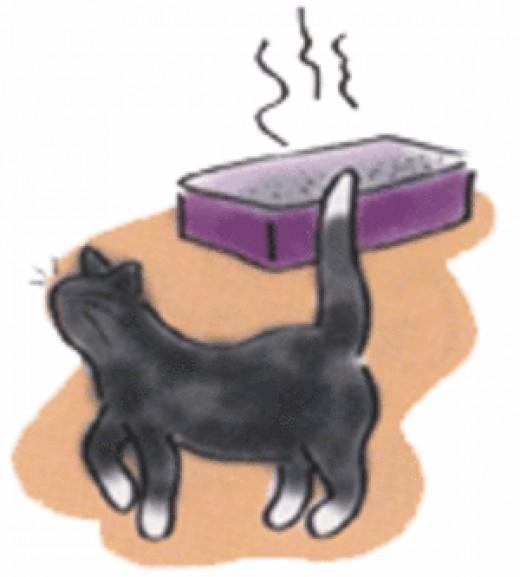 Potty Training Your Cat