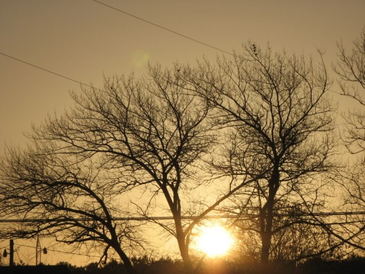 A golden Sun greets us through the trees heralding a new day in Oak Hall, Virginia, U.S.A. Photo by Windy Grace Mason.