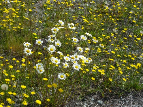 Photo 23 - These little flowers are like a bright splash of sunshine!