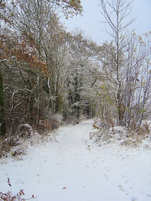 A lovely, snowy walk in Limousin