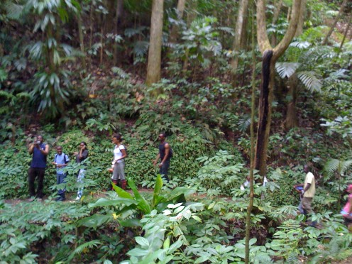 Hiking in the rain forest in St lucia