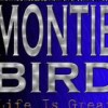 montie bird profile image