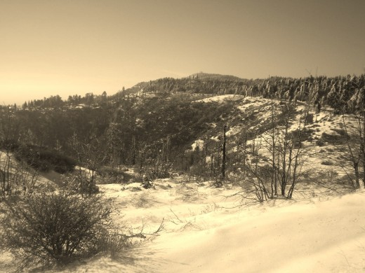 Sepia photograph I took of the snow in the San Bernardino Mountains.