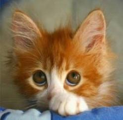 Top Ten Reasons For Not Having A Cat...