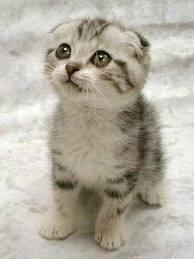 Ooh, ooh, love me, I'm adorable...