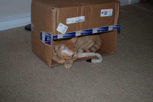 We loooove boxes
