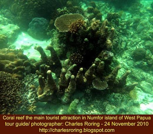 Coral reef in Amberimasi bay